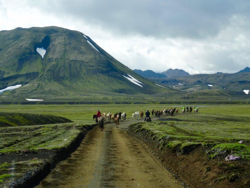 Hinter der Pferdeherde entlang der spektakulären Fjallabakstrecke. 12.07.2016