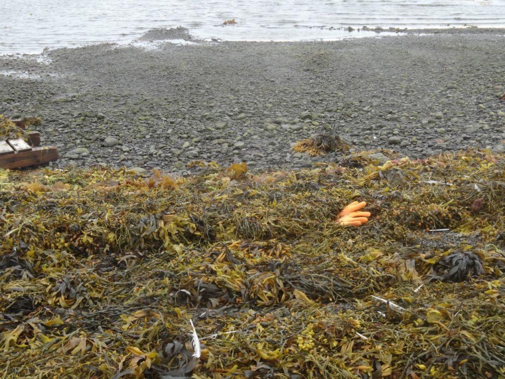 Krimireifes Strand-Stilleben in Strandir. 06.07.2014